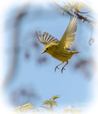 Photograph - Landing Gear Down by Grace Grogan