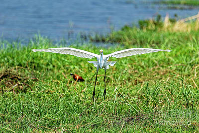 Photograph - Landing Gear Down by Kay Brewer
