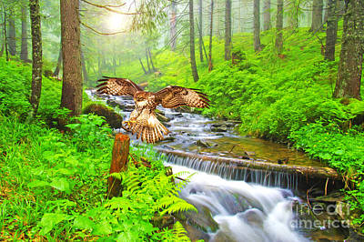 Red Tail Hawk Wall Art - Photograph - Landing Gear Down by Laura D Young