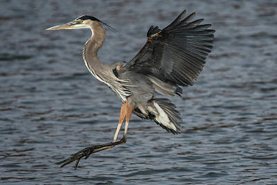 Photograph - Landing Gear Down by Linda Shannon Morgan