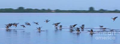 Photograph - Landing Goose by Casper Cammeraat