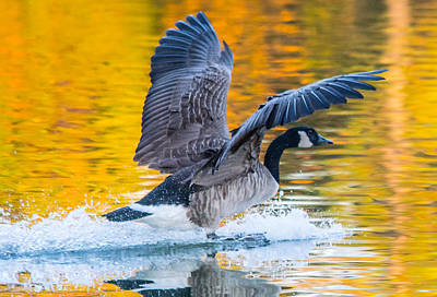 Photograph - Landing In Fall Colors by Parker Cunningham