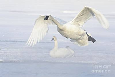Art Print featuring the photograph Landing In The Cold by Larry Ricker