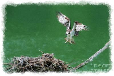 Photograph - Landing On The Osprey Nest by Dan Friend