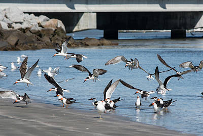 Photograph - Landing Party by Ed Waldrop