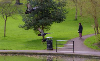 Photograph - Landing Pigeon In The Park D by Jacek Wojnarowski