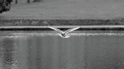 Photograph - Landing Pigeon In The Park J by Jacek Wojnarowski