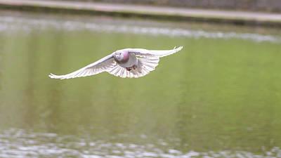 Photograph - Landing Pigeon In The Park K by Jacek Wojnarowski