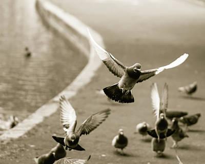 Photograph - Landing Pigeon In The Park U by Jacek Wojnarowski
