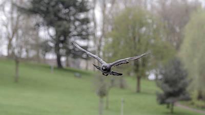 Photograph - Landing Pigeon In The Park V by Jacek Wojnarowski