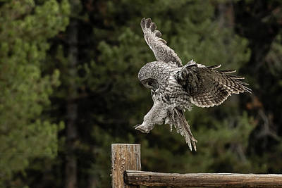 Photograph - Landing Zone by Bruce J Barker