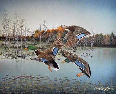 Wood Duck Painting - Landing Zone by Don Engler