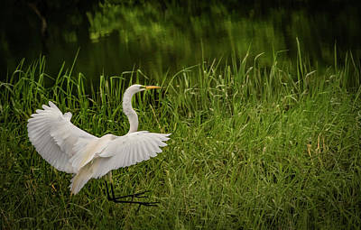 Photograph - Landing Zone by Ray Congrove