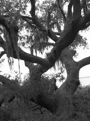 Lands End Talking Tree Art Print