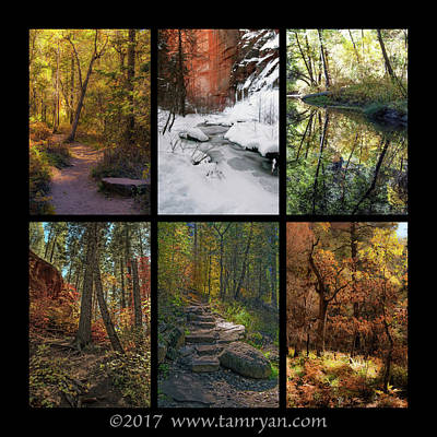 Photograph - Landscape Fall Color Collage 2 by Tam Ryan