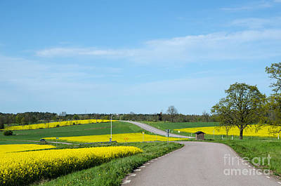 Photograph - Landscape In Green And Yellow by Kennerth and Birgitta Kullman