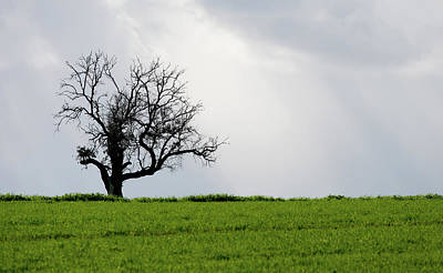 Landscape, Lonely Olive Tree In A Green Meadow Original by Michalakis Ppalis