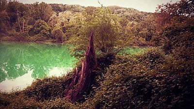 #landscape #nature #river #trees #trunk Original
