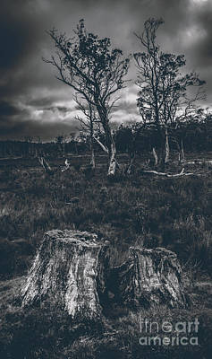 Landscape Of A Dark Creepy Australian Woodland  Art Print by Jorgo Photography - Wall Art Gallery