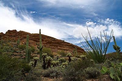 Phoenix Photograph - Landscape Of Arizona Desert by Jacob Knaup