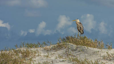 Photograph - Landscape Of The Great Blue Heron by Paula Porterfield-Izzo