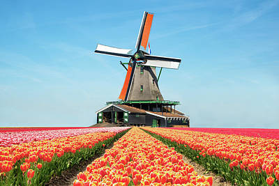 Landscape Of Tulips And Windmills In The Netherlands.  Original by Prasit Rodphan
