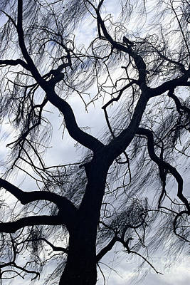 Photograph - landscape photography stormy tree - Willow Tree in Winter by Sharon Hudson