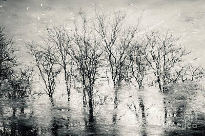 Photograph - Landscape Reflection Forest by Dimitar Hristov