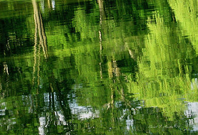 Photograph - Green Tree Landscape Reflections Wall Art by Carol F Austin