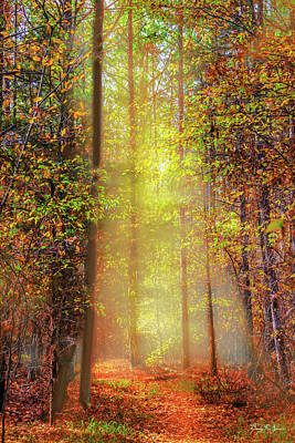Photograph - Landscape - Sunrise - Into The Woods by Barry Jones