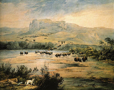 Painting - Landscape With Herd Of Buffalo Wall Art Prints by Karl Bodmer