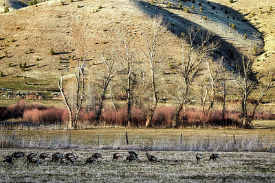 Photograph - Landscape With Turkeys And Trees by Belinda Greb