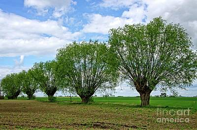 Photograph - Landscape With Willow Trees by Elzbieta Fazel