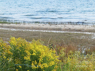 Photograph - Landscapes L206 by Monica C Stovall