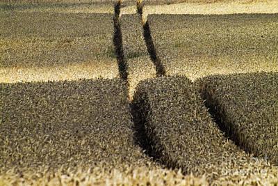Cornfield Photograph - Lanes On Cornfield by Heiko Koehrer-Wagner