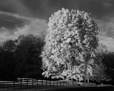Photograph - Langley Morn by Bill Kellett