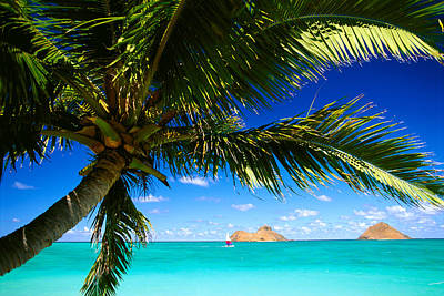 Photograph - Lanikai, Palm Tree by Dana Edmunds - Printscapes