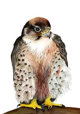Painting - Lanner Falcon by Alison Langridge