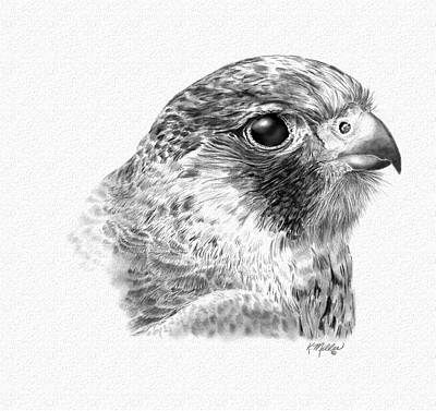 Digital Art - Lanner Falcon by Kathie Miller