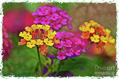 Photograph - Lantana Close View 1 by Debbie Portwood