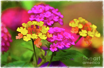 Photograph - Lantana Close View 3 Digital Effect by Debbie Portwood