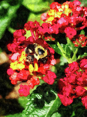 Photograph - Lantanas And The Bee by Susan Savad