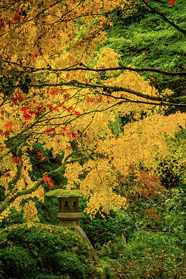 Photograph - Lantern In Fall Colors by Don Schwartz