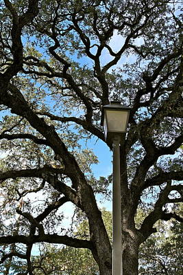 Photograph - Lantern Meets The Oak by Michele Myers