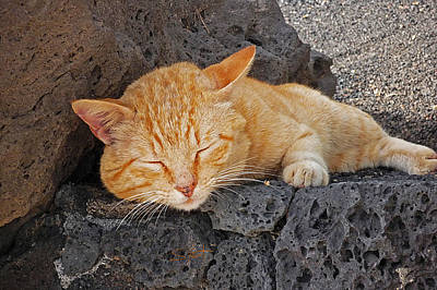 Photograph - Lanzarote Ginger by Charles Stuart