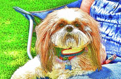 Muzzle Digital Art - Lap Dog Shih Tzu Abstract by Linda Brody