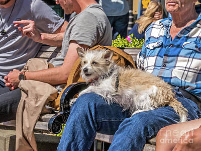 Photograph - Lap Dog by Kate Brown