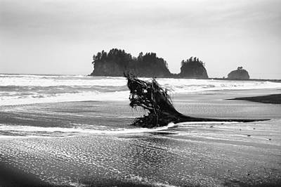 Lapush Washington Art Print by Todd Fox