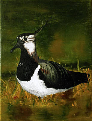 Lapwing Painting - Lapwing by Maria Woithofer