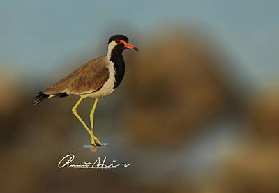 Lapwing Digital Art - Lapwing  by Rk Ahir